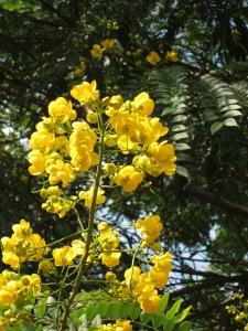 Lalbagh Botanical Garden, Bengaluru