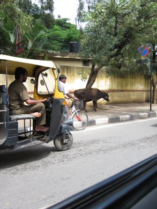 It is not clear when Namma Metro will be completed. But Bengaluru will always have auto rickshaws and cows!