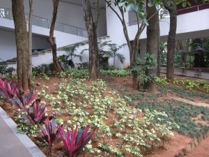 Garden at the National Gallery of Modern Art, Bengaluru.